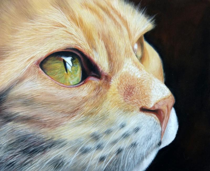 Katzen & Wildkatzen zeichnen in Pastell